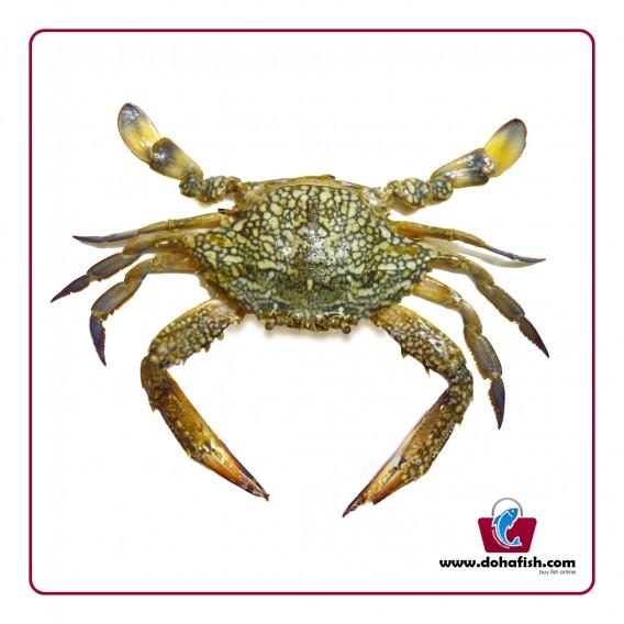 Crab Female