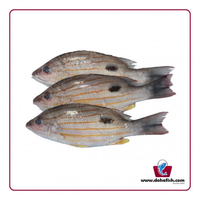 Naiser Fish